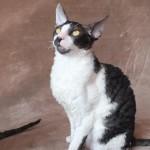 kociaki-azurro (15)